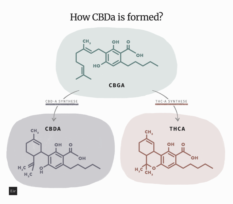 How CBDa is formed - the process