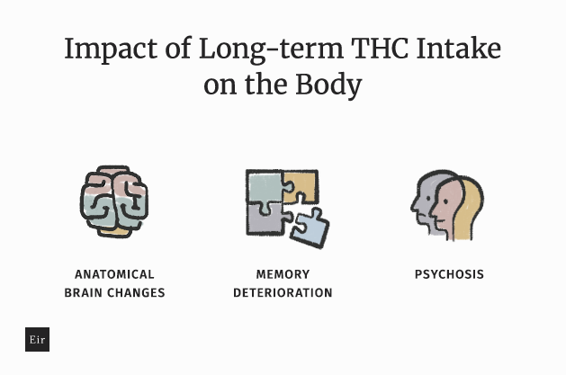 The impact of long-term THC intake on the body