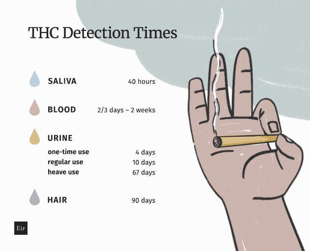THC detection time