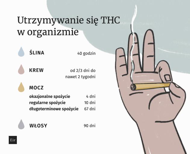 Utrzymywanie się THC w organizmie
