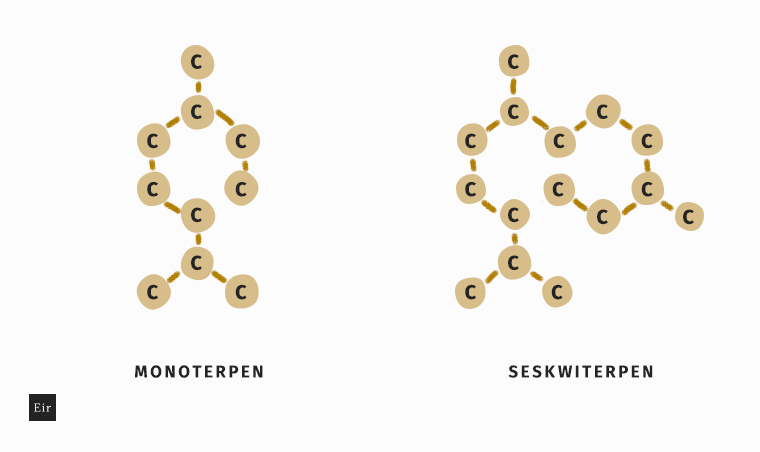 Monoterpen i seskwiterpen - struktura chemiczna
