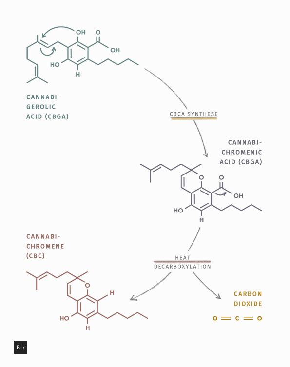 CBC formation in the decarboxylation process - chemical reaction scheme
