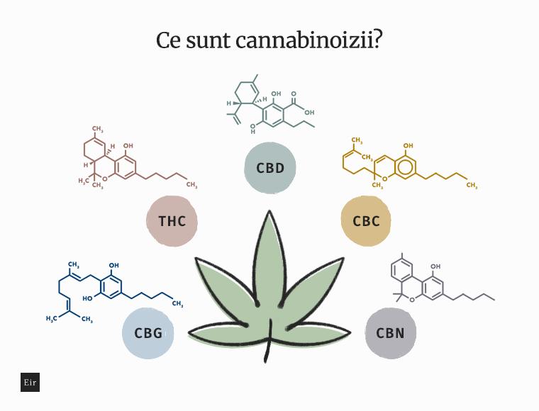 Ce sunt cannabinoizii: CBG, THC, CBD, CBC, CBN
