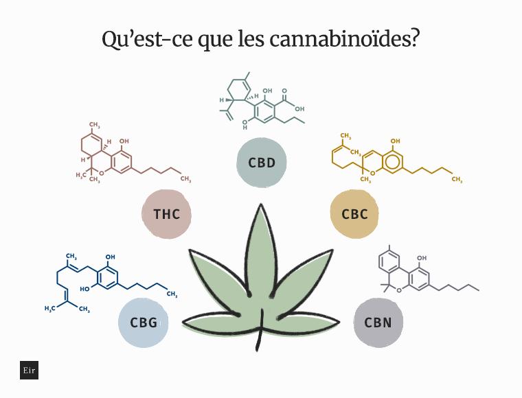 Qu'est-ce que les cannabinoïdes: CBG, THC, CBD, CBC, CBN