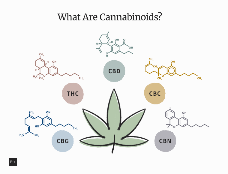 What Are Cannabinoids: CBD, THC, CBN, CBC, CBG