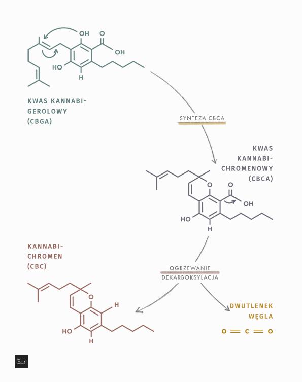 Powstawanie CBC w procesie dekarboksylacji - schemat reakcji chemicznej